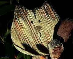 """Woody"" the Scaredy-Cat Afraid of the Dark......Macro Mondays (Lani Elliott) Tags: wood macro upclose closeup bokeh darkbackground textured light bright cat woodencat toy shadows madeofwood macromondays"