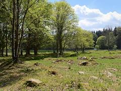 Schierke_e-m10_1015188088 (Torben*) Tags: rawtherapee olympusomdem10 olympusm17mmf18 harz schierke bäume trees wiese meadow steine rocks landschaft landscape
