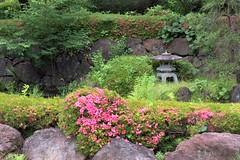 つつじと灯籠 (Abhay Parvate) Tags: azalea つつじ 灯籠 lantern japanese garden 庭園 oomiyapark 大宮公園 nature