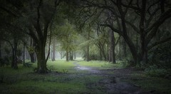 Enchanteresse Mystique à l'Aube (JDS Fine Art Photography) Tags: trees dawn atmosphere mist misty mystical beauty nature landscape green inspirational naturalbeauty naturesbeauty fairytail elitegalleryaoi bestcapturesaoi aoi