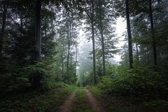 Ramir - Sony RX0M2 (Andreas Voegele) Tags: sony sonyrx0ii sonyrx0 rx0ii andreasvoegelephoto landscape foreststreet forest