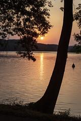 Lake Baldeneysee Sunset (*Photofreaks*) Tags: adengs wwwphotofreakseu baldeneysee essen ruhr ruhrgebiet deutschland germany nrw nordrheinwestfalen northrhinewestphalia sunset sonnenuntergang nature natur landscape landschaft sun sonne july juli 2019 tree baum dusk abenddämmerung