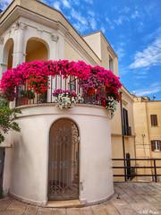 Flowers (vmoska) Tags: bari photo urbanlife colours italy walk flowers streetphotography lights oldtown puglia red