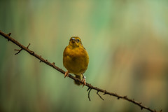 (carlo.medina527) Tags: wildlifephotography wildlifephotographer wildlife birdphotographer 70200mm canon5dmarkiv birds canon