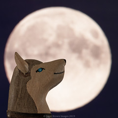 2019 210-365 Wolf Moon (kayakingjanet) Tags: macro madeofwood moon moonstarsandplanets space techniques wolf 2019365 infinitepossibilities macromondays head treasurehunt 2019th35
