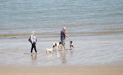 Dogplay (Gill Stafford) Tags: gillstafford gillys image photograph wales northwales conwy colwynbay resort tourists dogs recreation sea