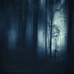 h o p e (Dyrk.Wyst) Tags: atmosphäre bergischesland herbst landschaft licht nebel stimmung wald wuppertal atmosphere autumn fog forest landscape light mood morgens nature blue monochrome abstract obscure tinted bluehues male standstill hope
