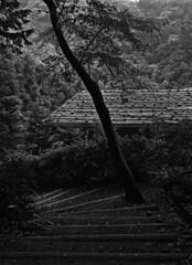 Out of the blue (lebre.jaime) Tags: japan 日本 kawasakicity 川崎市 japanesetraditionalhomepark 日本民家園 architecture traditionalarchitecture path tree roof analogic mediumformat mf film120 kodak technicalpan iso20 blackwhite bw pretobranco pb noiretblanc nb hasselblad 503cx distagon cf4050fle epson v600 affinity affinityphoto