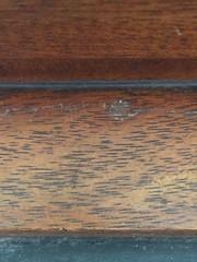 "Macro Mondays - ""Made of Wood"" (hp349) Tags: closeup mm hmm monday wood madeofwood macromondays mondays macro"