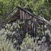 Abandoned cabin in Osiris, Utah