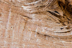 """Made of Wood"" ""Macro Mondays"" (stgenner) Tags: holz macromondays macro wood ""macromondays"" madeofwood"