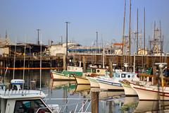 Fisherman's Wharf Marina (harald152) Tags: sanfrancisco kalifornien vereinigtestaaten marina pier fishermans wharf hafen harbour ships fishing schiffe fischfang
