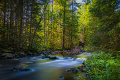 Forest creek (mabuli90) Tags: finland river creek forest summer north karelia landscape nature tree water rock longexposure plant