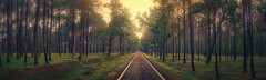 road to nowhere .. (tchakladerphotography) Tags: panorama landscape light evening woods forest travel trees road india atmosphere naturallight colorful