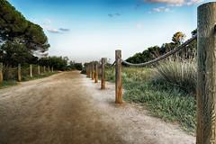 Camino a la playa (candi...) Tags: camino estacas troncos cuerdas bosque lametllademar naturaleza nature airelibre sonya77ii