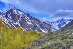 Riparian habitat (Chief Bwana) Tags: ca california sierras sierranevada mcgeecreek mcgeecanyon mountains riparian aspens psa104 chiefbwana