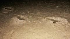 Eric Moffett's bootprints in the mud (essex_mud_explorer) Tags: ericmoffett mud muddy creek matsch schlamm boue estuary tidal holehaven benfleet essex canvey boots