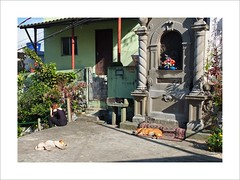 Do not disturb (W Gaspar) Tags: urban woman dog pet street santos brazil brasil southamerica latinamerica sunny fujifilm x10 finepix photoborder travel ordinary life geotagged