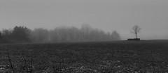 Burial Place (phthaloblu) Tags: burialplot familycemetery local guilfordcounty nc northcarolina usa fog misty blackwhite