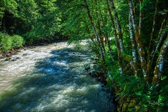Cispus River (Jerry Nelson Photography) Tags: water river trees forest aspens hdr landscape scenic mountains