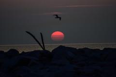 A Hot Summer's Day Sunrise (larry kapellusch) Tags: sunrise nature lake michigan