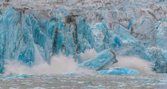 Dawes Glacier (jeff's pixels) Tags: glacier alaska landscape iceberg nature amazing blue ice ocean endicott arm fjord dawes dawesglacier nikon d850 bird bus train plane outside nikkor water snow winter summer sea
