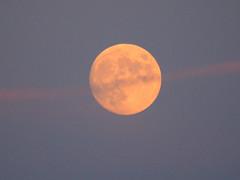 Skytrail Over a Full Moon (Explore #80, July 30, 2019) ... (Irene, Montreal, QC) Tags: sky skies skyline skyscenes awesomeskies awesomenature moon moonmadness moonlight moonmoods moonshots fullmoon summermoon skytrailoverafullmoon eveningskies skytrail strawberrymoon fullbuckmoon nativeamericanfullmoonnames fullmoonjuly2019