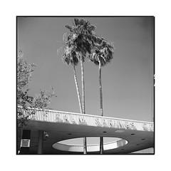 city hole • palm springs, ca • 2018 (lem's) Tags: city hole hall mairie palm springs ca california palmiers architecture midcentury desert googie rolleiflex t