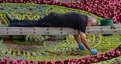 Floral Clock Gardener (Edinburgh Photography) Tags: outdoors flowers gardener man photojournalism documentary princes street gardens edinburgh nikon d7000