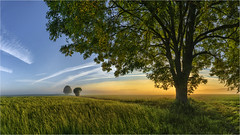 Tagesanbruch (Robbi Metz) Tags: germany bavaria reischenau augsburgwestlichewälder landscape trees sunrise grassland sonyilce7m3