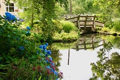 The Bridge (adamsgc1) Tags: pond bridge garden hydrangea village veryan cornwall england uk reflection