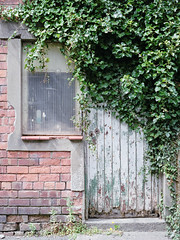 Overgrown (Howie Mudge LRPS BPE1*) Tags: door window leaves vines overgrown stilllife wall bricks bronicaetrsi zenzanonbronica75mmf28 fujipro400h tetenalc41 selfdevelop negative analog analogphotography analogue film filmphotography 120film 645 6x45