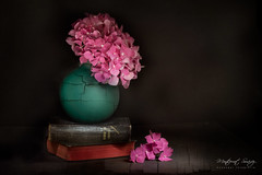 Tiempo-de-hortensias-II (monsugar) Tags: art photo hortensia flores bodegon stillife luces sombras color texturas interior