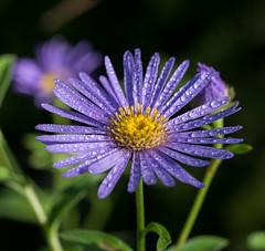 Here comes the Sun. (Omygodtom) Tags: mist dew flora flower wildflower texture tamron90mm d7100 bokeh dof water usgs algorithm smugmug flickriver