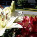 White lily, our porch