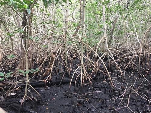 Secret Woods Nature Center, Fort Lauderdale, Florida