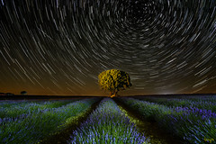 Half an hour in the universe (toniyoo) Tags: night nightphotography nightcolours nightimages nightscape nightshooters nightlandscape nightsky magicatnight colorsofnight landscapephotography brihuega lavender tree astrophotography startrails