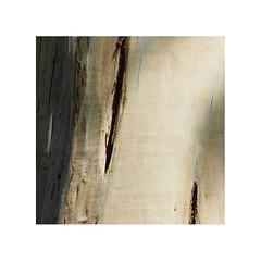 Eucalyptus (JJDuvoisin) Tags: fuji x30 bretagne brittany