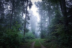 Ramiz - Sony RX0M2 (Andreas Voegele) Tags: sony sonyrx0ii sonyrx0 rx0ii andreasvoegelephoto landscape foreststreet forest