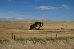 South Africa -  R 319 Swellendam - Bredasdorp (CHWVB) Tags: africa south kornfeld kornkammer smileonsaturday meadowsandfields farm fields farmer haystacks