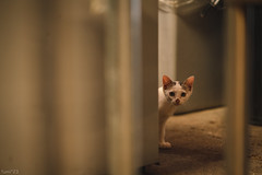 猫 (fumi*23) Tags: ilce7rm3 sony street sel85f18 85mm fe85mmf18 a7r3 animal alley emount ねこ 猫 ソニー