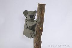 コアラ / Koala (Gen Hagiwara) Tags: origami paper folding craft art koala australia genhagiwara