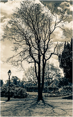 Normanby Hall (Nicky Thomas Photography) Tags: black white bw monochrome split tone noir tree landscape normanby hall lincolnshire stately home dramatic nikon amateur photographer fx d750 england lincoln great britain united kingdom europe shadowing nature silhouette