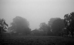 Near distance (Rosenthal Photography) Tags: asa400 kleinbildformat ilfordlc2912920°c9min ff135 analog ilfordhp5 epsonv800 olympustrip35 schwarzweiss frühling ilfordrapidfixer 35mm sommer 20190601 neardistance distance mood mist mistymirror mirror landscape fog farm fields meadow trees morning summer june blackandwhite olympus olympus35 trip trip35 dzuiko zuiko f28 ilford hp5 hp5plus lc29 129 rapid fixer epson v800