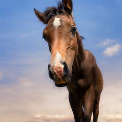 Another nosy foal (FocusPocus Photography) Tags: araber araberfohlen arab arabian foal pferd horse marbach hauptundlandgestüt himmel sky