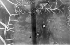 Katie in Stereo (kterkan) Tags: instantograph glassplate rolleiblackmagic alternativephotography antiquecamera thorntonpickard stereoscope stereoscopic