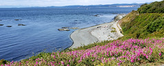 Holland Point by Dallas Road (Bill 3 Million views) Tags: hollandpoint capitalregionaldistrict crd dallas dallasroad ocean seaside samsung smn960w galaxy note9 victoria esquimalt saanich oakbay viewroyal langford colwood indians flowers forcemain