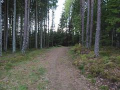 Trail (mtbboy1993) Tags: opencamera rawtherapee ihlen askim indreøstfold østfold norway norge skog forest trail sti fjellbu