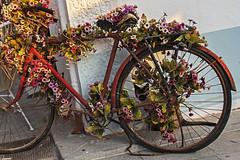 190717 MIL PALMERAS (MAVARAS) Tags: bicicleta flowers flores cat gato colores bike