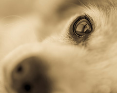 my sunshine (risaclics) Tags: 60mmmacro dogs july2019 nikond610 risa animlas monochrome pets